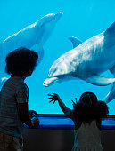 A mixed race African-American and Caucasian 14 year old teenage boy and his little 9 year old sister at the aquarium looking at an bottlenose dolphins.