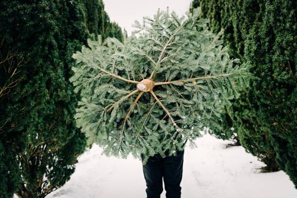 10 代の少年が自宅のクリスマス ツリーを運ぶします。 - クリスマスツリー ストックフォトと画像