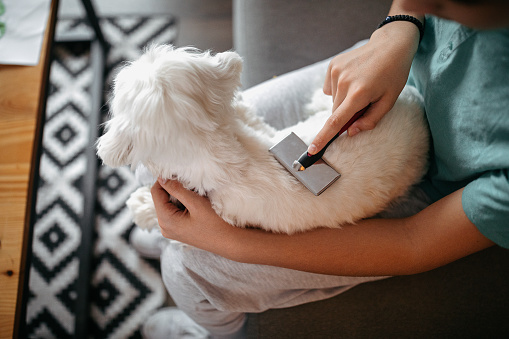 Teenage boy sitting on sofa and grooming his dog in living room