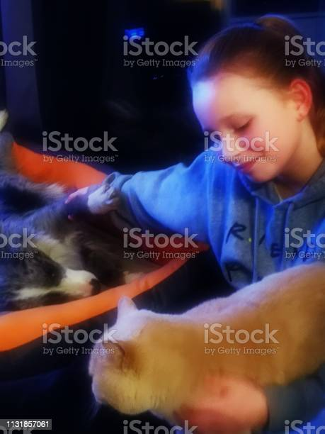 Teenage girl cuddles her dog and cat picture id1131857061?b=1&k=6&m=1131857061&s=612x612&h=o2ng vutg0q22s1ahmk0ylcxn62gnrk9jwcx0nqa9ew=