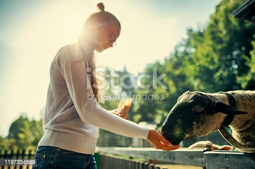 Teenage girl is feeding sheep over fence. Sunny summer day. Nikon D850.