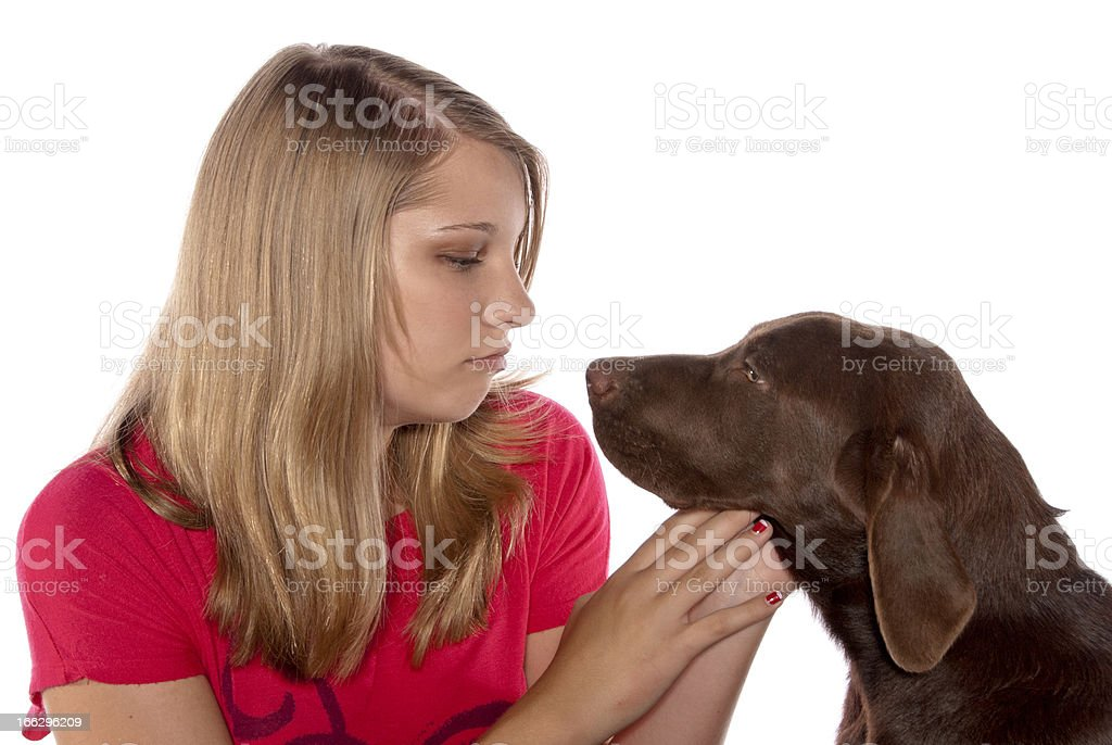 Teenage girl puppy Chocolate Labrador retriever royalty-free stock photo
