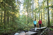 Eurasian teen girl, Caucasian teen boy, and 4 pet dogs in Seymour Demonstration Forest, North Vancouver, British Columbia, Canada