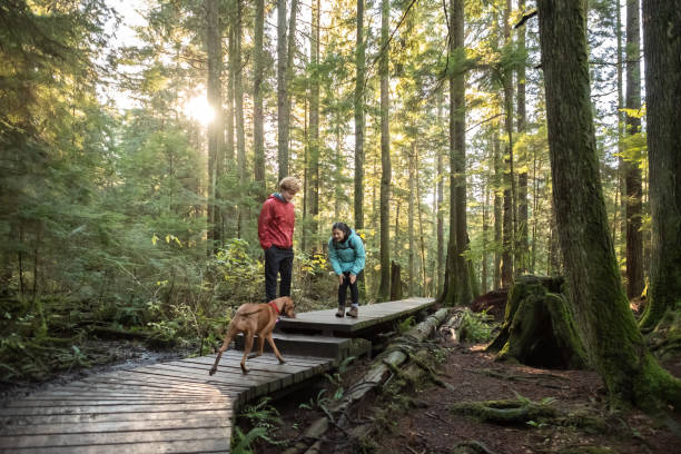 Teenaged Girl with Boy Calling Vizsla Dog on Forest Boardwalk stock photo