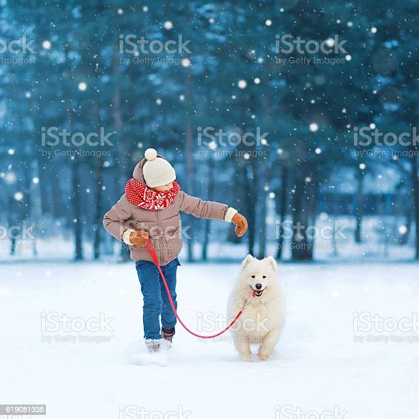 Teenager boy running with white samoyed dog on snow winter picture id619081338?b=1&k=6&m=619081338&s=612x612&h=ozmt69t9h0m0uthscpmc0m2q1nmacunh945qcsk3qwk=