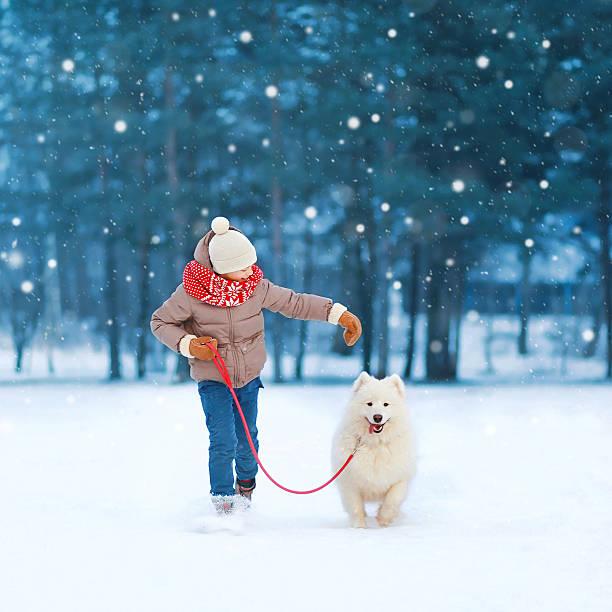 teenager boy running with white samoyed dog on snow winter - schneespiele stock-fotos und bilder