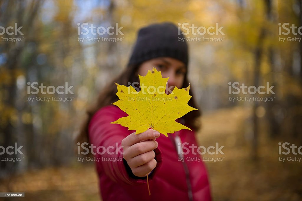 Teenager holding a maple leaf in autumn stock photo