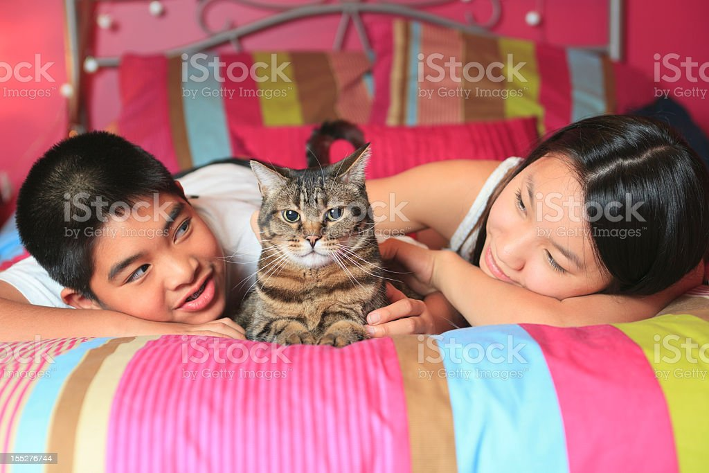 Teenager Home Lifestyle - Cat Center Bed royalty-free stock photo
