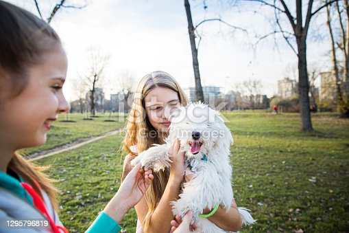 Teenager twin sisters at the park, holding their white puppy, Curly Bichone