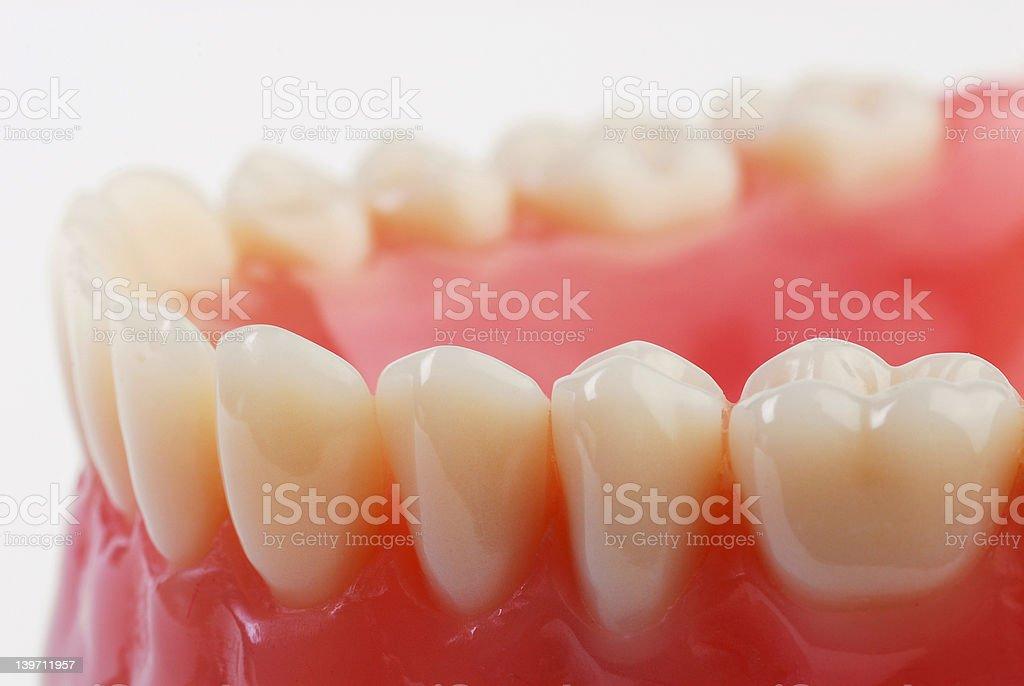 teeth 2 stock photo