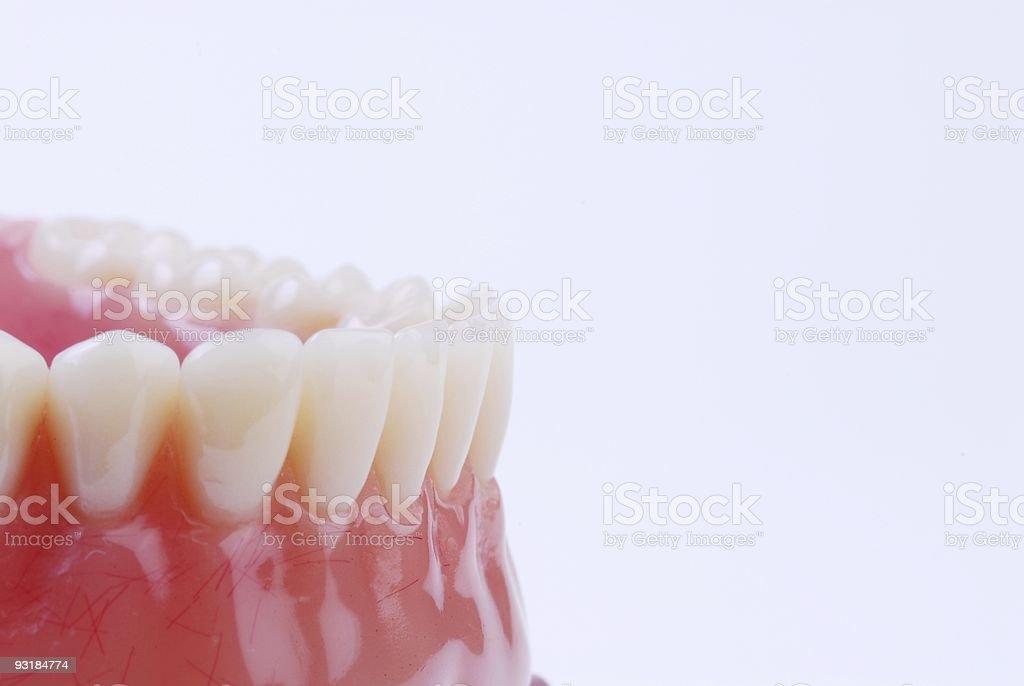teeth 5 stock photo