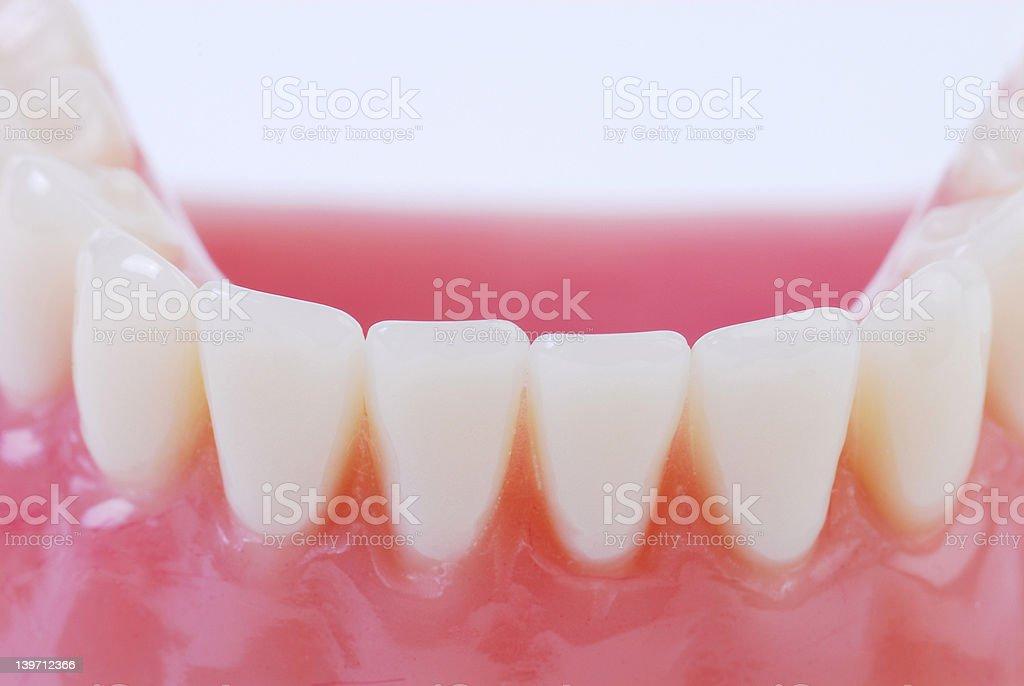 teeth 8 stock photo