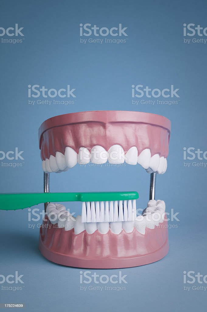 Teeth model with brush royalty-free stock photo