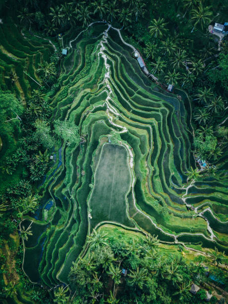 tegallalang rice terrace texture from above - indonesia stock photos and pictures