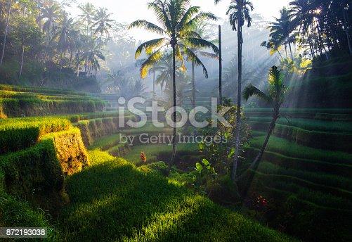 Tegallalang Rice terraces at sunrise