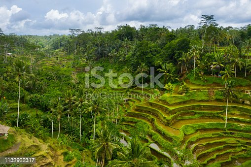 Rice fields on Bali, aerial drone shot