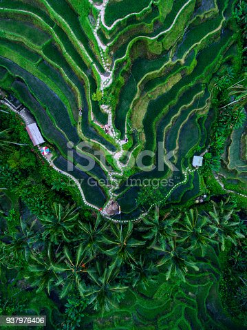 Tegallalang Rice terraces aerial view by drone