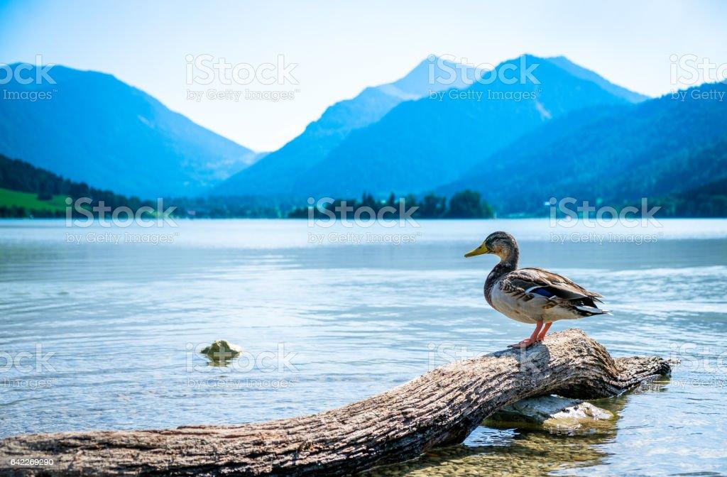 tegernsee lake stock photo