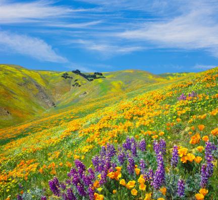 Tehachapi Mountains with Golden Poppies