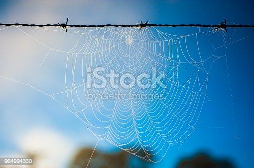 Teia de aranha congelada na cidade de Urubici em Santa Catarina, Brasil. Fenômeno comum durante o período de inverno.