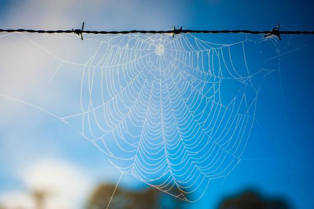 teia de aranha congelada - spider web stock photos and pictures