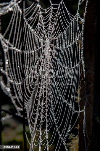 Teia De Aranha Congelada Stock Photo & More Pictures of Abstract