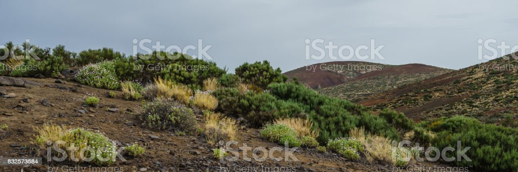 Teide National Park in Tenerife stock photo