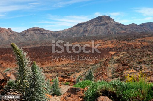 istock Teide national park with Tenerife bugloss Llano de Ucanca valley 157053318