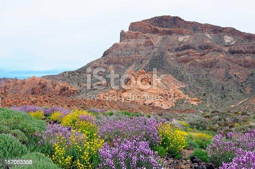 istock Teide national park with treeless Llano de Ucanca valley. tenerife 157053358
