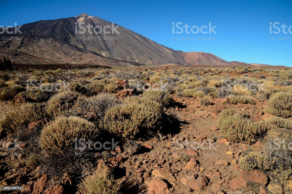 Teide Tenerife Volcan Basaltic Mountain royalty-free stock photo