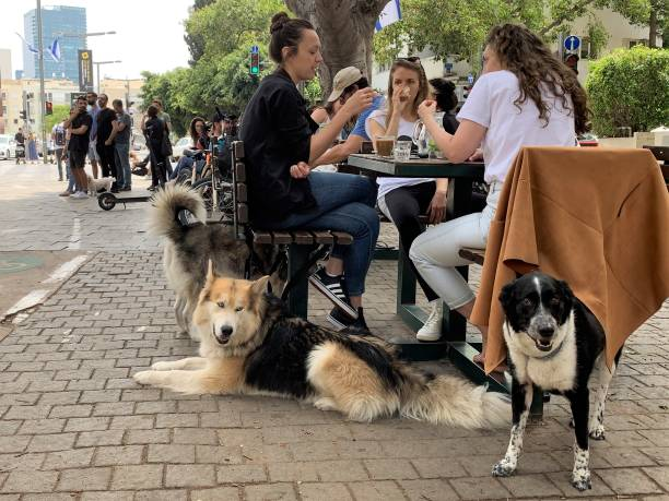 Tel Aviv, a city for coffee and dogs. stock photo