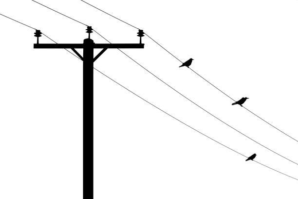 Telegraph Pole and birds stock photo