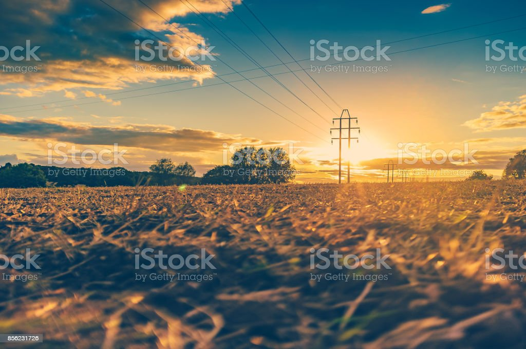Telegraph poles, at sunset. stock photo