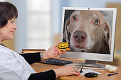 Telemedicine veterinarian gives a hamburger to weimaraner dog in computer monitor. Doctor invites her to the clinic for real treatment. The dog looks at vet incredulously. Horizontal medium shot on blurred interior background