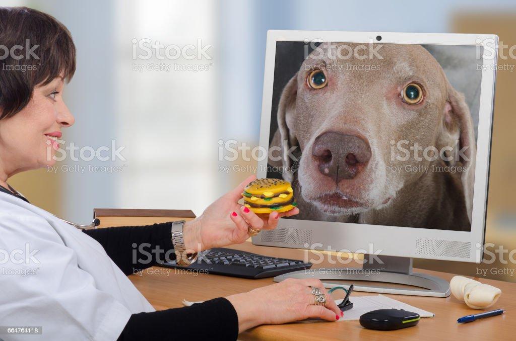 Telemedicine vet gives a hamburger to dog in monitor stock photo
