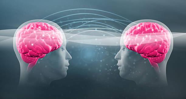 gedankenlesen: zwei menschlichen kopf mit sichtbaren intelligenz sich zusammen - gedanken lesen stock-fotos und bilder