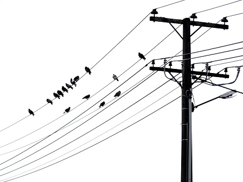 Telephone Pole With Birds Perching On Wires Stock Photo