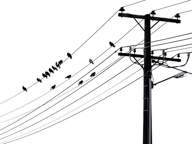 Vogel Stange - Bilder und Stockfotos - iStock