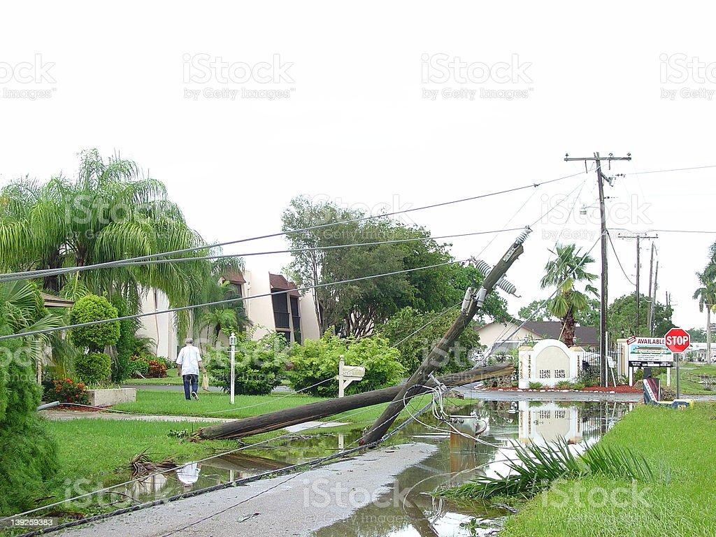 telephone tree is on the floor stock photo