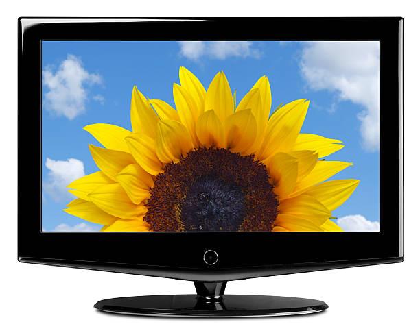 lcd-fernsehgerät & sonnenblume xxl clipping path - wohnlandschaft xxl stock-fotos und bilder