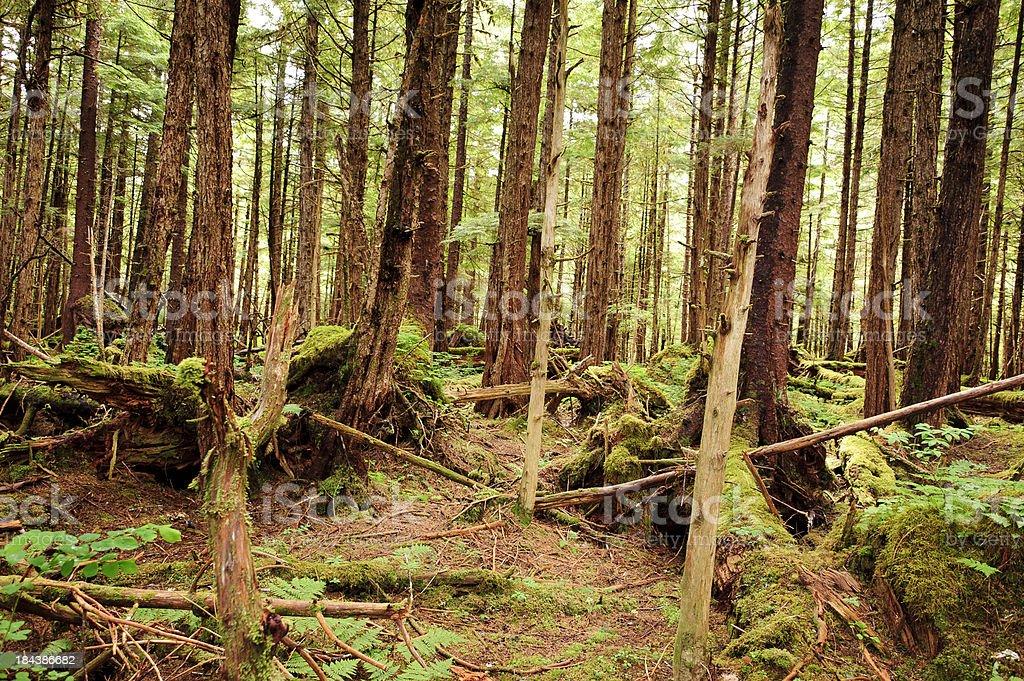 Temperate Rain Forest stock photo