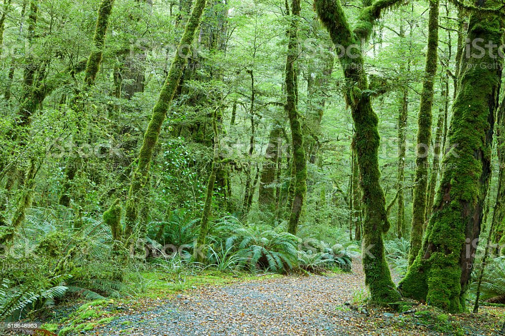Temperate rain forest stock photo
