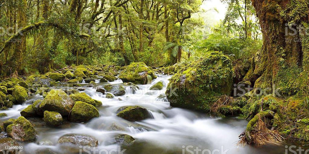 Temperate Rainforest Panorama - 57 Megapixels royalty-free stock photo