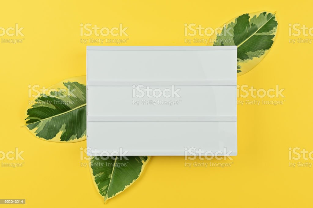 Template with white mood board with natural leaves of ficus stock photo