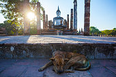Temple in Sukhothai at sunset, Thailand