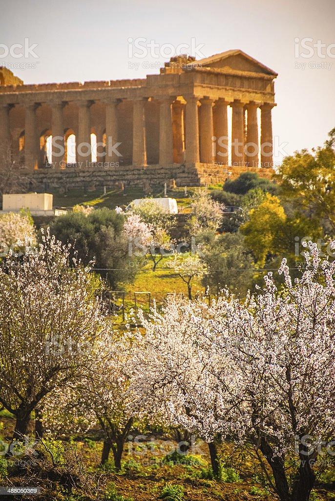 Tempio della Concordia e fiore di primavera - foto stock