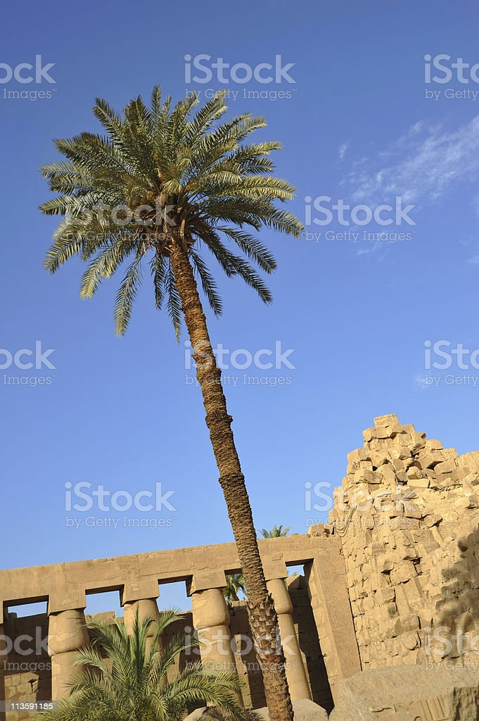 Temple Palm Tree stock photo