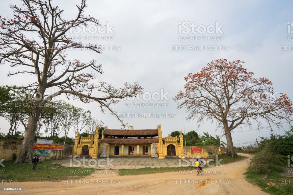 Temple with blooming bombax ceiba tree stock photo