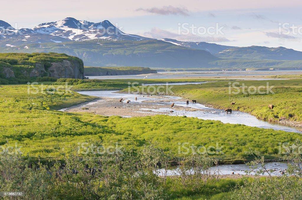 Ten Bears Fishing in Alaska Landscape stock photo