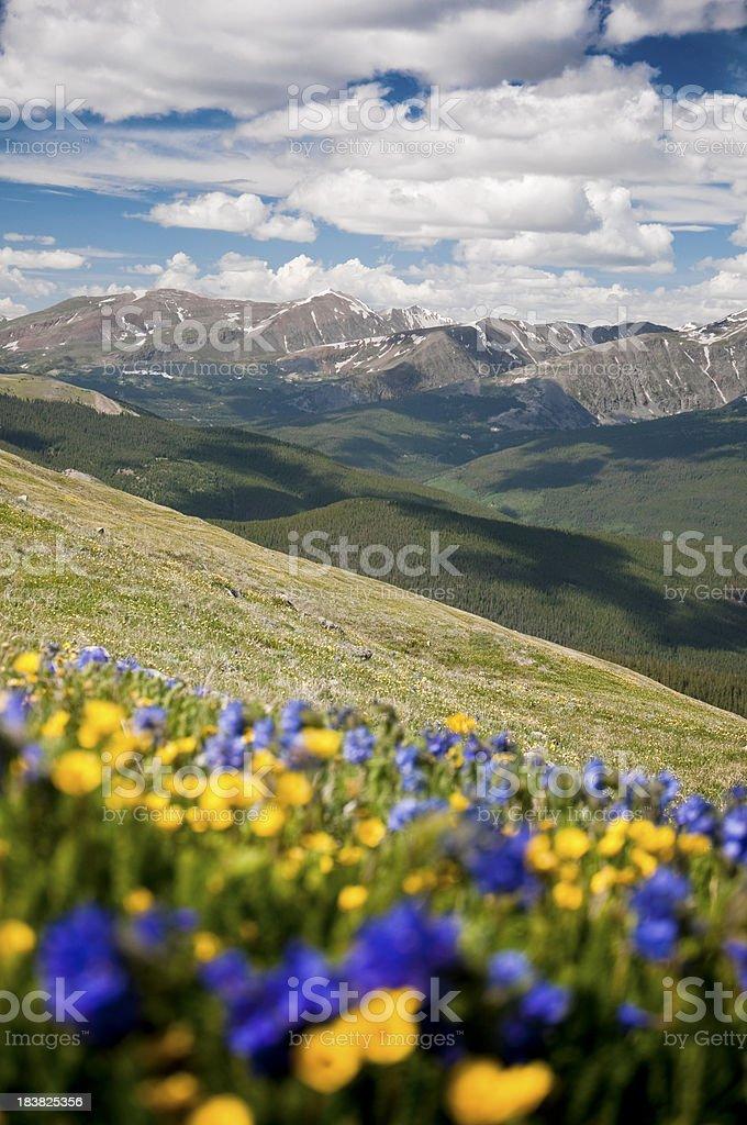 Ten Mile Range and Mountain Wildflowers stock photo